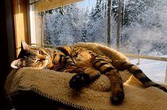 Cat slumbering in a warm patch of sunlight.