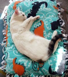 My kittens are very soft and sweet (don't tell Coco I said so - she's a fierce warrior kitten!), and they deserve a soft, sweet place to sleep. These beds are...