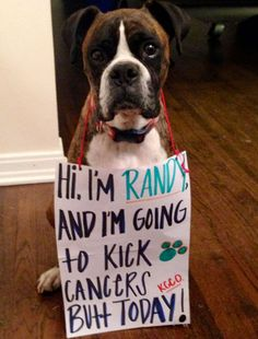 See 10 Awesome Miracle Dogs Who Beat Cancer