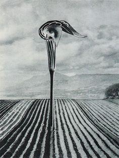 Karel Teige, untitled collage, 1940s.