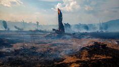 Hundreds of global corporations have promised to help limit deforestation. None of them is meeting that goal. Carbon Sink, Brazil Amazon, Forest Ecosystem, Amazon Rainforest, Global Economy, Supply Chain, Destruction, Climate Change, Timberland