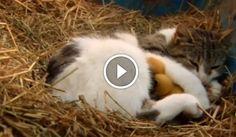 Nagyon meglepődtek, amikor látták, mit rejteget előlük cicájuk! Gondoltad volna? :)