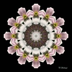Mandala ''Clematis'' von KreativesbyPetra    Mandala auf Leinwand gespannt 20cm x 20cm, mit schwarzen Seitenrand 2cm breit    #kreativesbypetra #Mandala #mandalaart #Natur #nature #fotografie #photography #naturfotografie #naturephotography #makro #macro #makrofotografie #macrophotography #Spiegelung #Spiegelungen #abstrakt #Abstract #Reflexion #adobephotoshop #photoshop #canon #farben #colours #Leinwand #blüte #blossom #clematis Mandala Art, Adobe Photoshop, Clematis, Canon, Floral Wreath, Decor, Mandalas, Macro Photography, Nature Photography