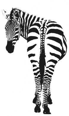 Illustration from Alina Wahlers @ feine art | Zebra