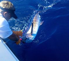 Blue Marlin  #offshore #offshorefishing #offshorelife #offshorecharleton #bluemarlin #captin #fishing #charleston #charlestonsc #charlestonfishing #charlestonsouthcarolina #familytraditioncharters by family_tradition_charters