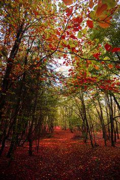 Fotografía Red Path por Diana Oprean en 500px