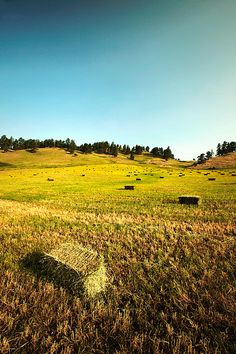 Montana Hay Field by Todd Klassy