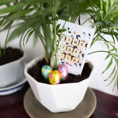 Easter egg hunt - instax style | instax Instant Photography
