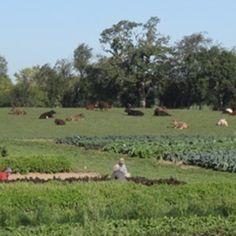 What Is Biodynamics? | Biodynamic Farming and Gardening Association