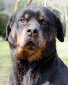 REBECCA – Riesentraumhund passt auf!
