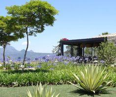Dos baixos arbustos de espécies pontiagudas surgem agapantos lilás (Agapanthus africanus), que também não crescem muito - eles chegam, no máximo, a cerca de um metro de altura (de 60 cm a 90 cm). A vantagem dessas flores é que possuem ciclo perene de vida e se desenvolvem muito bem sob o sol pleno. O jardim Platô, com projeto do escritório Landscape Paisagismo, fica em uma residência em Itaipava, Rio de Janeiro