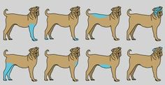 Massaging These Areas Of Your Dog May Be CRUCIAL To Their Health. I Had No Idea!