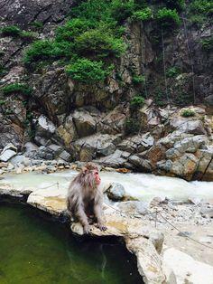 Snow monkey park - Japan