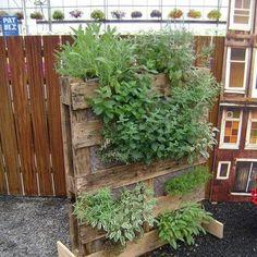 Herb Garden on standing pallett