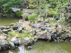 Izu Shaboten animal park, Ito