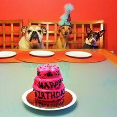 Contact us for Doggie Bag Cafe, Dog Birthday Cakes, Organic Gourmet Dog Food and Bakery Treats We Cater to Your Pet's Desire! Dog Birthday, Birthday Cake, Birthday Parties, Doggie Bag, Dog Boutique, Dog Food Recipes, Catering, Bakery, Treats