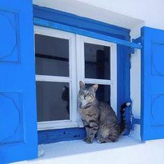 Cats, Colors, Animals, Gatos, Animales, Animaux, Colour, Animal, Cat