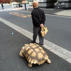 Les habitants de Tokyo font parfois la rencontre magique de ce binôme hors-norme, déambulant dans les petites rues de la ville.  La vieillesse et la patience rassemblent ce duo qui se balade avec une notion du temps bien différente des autres habitants de la mégalopole. Le vieux monsieur entretient une relation particulière avec sa tortue, qui est certainement son plus vieil ami. L'animal, une tortue africaine ou « sulcata » suit son maitre au pas dans ses virées matinales.