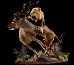 The innovator in the taxidermy industry creating original, high quality works of wildlife art that share the story of your hunt. Taxidermy Decor, Taxidermy Display, Fight Tiger, Lion Painting, Most Beautiful Animals, African Animals, Wildlife Art, Animal Photography, Animal Kingdom