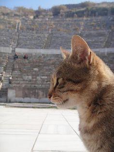 Ephesus Theatre Guardian