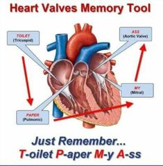 6 steps of the evidence based practice process nursing heart valves fandeluxe Choice Image