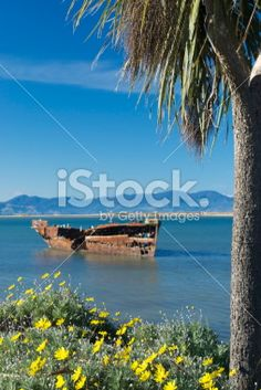 Ship Wreck Seascape, New Zealand Royalty Free Stock Photo Ship Wreck, New Zealand Landscape, Tree Images, Out Of Focus, Image Now, Seaside, Cabbage, Royalty Free Stock Photos, Photography