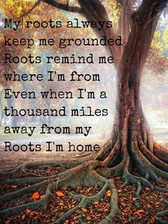 Zac Brown Band - Roots Band Quotes, Poem Quotes, Lyric Quotes, Poems, Life Quotes, Country Song Quotes, Country Lyrics, Country Music, Zac Brown Band Songs