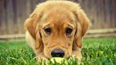 puppies - Buscar con Google