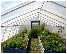 Inside the PVC greenhouse showing the raised beds.