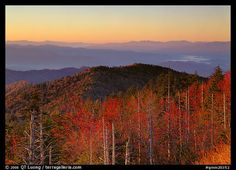 Trees in fall foliage and ridges from Clingman's dome at sunrise, North Carolina. Great Smoky Mountains National Park,Part of gallery of color pictures of US National Parks by professional photographer QT Luong, available as prints or for licensing. Smoky Mountain National Park, Smokey Mountain, Park Pictures, Us National Parks, Great Smoky Mountains, Travel Alone, Solo Travel, The Great Outdoors, Trip Planning