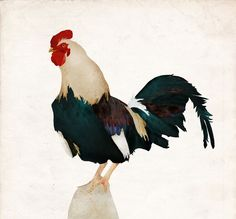#carriemay #newdivision #illustration #mixedmedia #stylised #textured #rooster