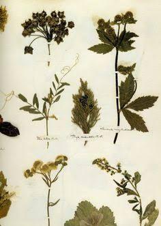 herbarium - Google 検索