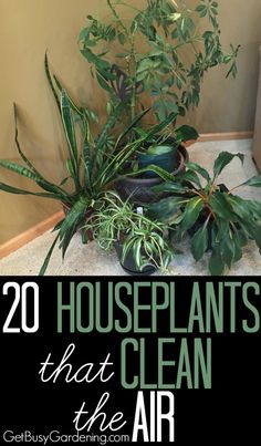 Add a couple of these clean air houseplants to the rooms that you use the most, like your bedroom or office, and you'll be breathing easier and enjoying green all year round! Here's a list of 20 Houseplants That Clean The Air In Your Home | GetBusyGardening.com