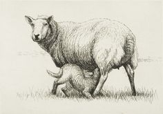 """Henry Moore """"Sheep with Lamb I"""" 1972, etching and drypoint   photo: The Henry Moore Foundation archive"""