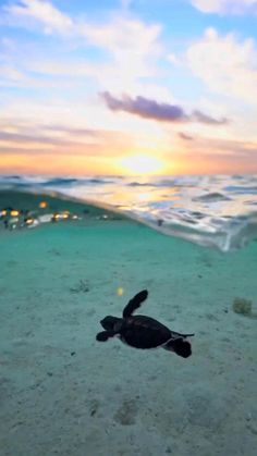 Beautiful Photos Of Nature, Beautiful Nature Wallpaper, Beautiful Places To Travel, Amazing Nature, Cute Animal Pictures, Cool Pictures, Beautiful Sea Creatures, Love Is In The Air, Ocean Life