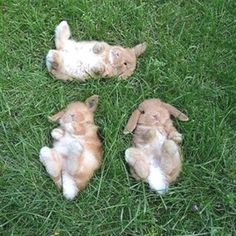Best Bunny Videos, Pictures, Supplies, Care, Guides, Information, books, ebook, trimming, grooming, bed, bedding, nails, treats, toys, and more. #bunnies #rabbit   #bunniesofinsta   #houserabbit Buy A Rabbit, Pet Rabbit, Rabbit Cages, House Rabbit, Super Cute Animals, Cute Funny Animals, Funny Dog Pictures, Animal Pictures, Rabbit Behavior