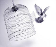 Freedom.....Written by my blog-friend Diva.