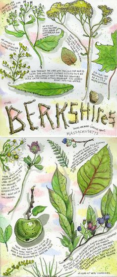Tommy Kane's Art Blog: Berkshires