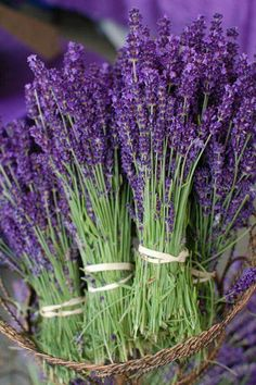 Lavender bunches in a basket
