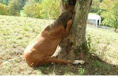 Estou a jogar às escondidas... Finge que não me viste! http://blog.carvalhohelder.com/