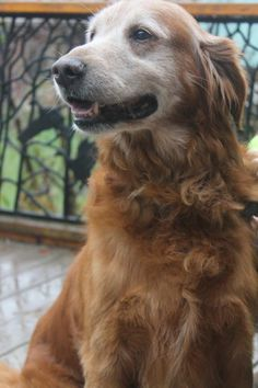 This is Toby approx 11-14 yrs old. His owner passed away and the 2 small dogs were taken by family members but Toby is looking for a forever home. He is neutered, current on vaccinations, potty trained, good with female dogs and cats. CASA (Crawford Area Shelters for Animals), Ferryville, WI. - http://www.casa-rescue.com/dog.html - https://www.petfinder.com/petdetail/36617324