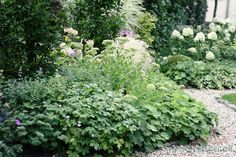 green souls of the garden