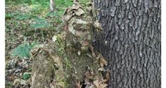 How to Be a Natural Camouflage Ninja [PICS] - Wide Open Spaces