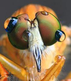 Photo Macro by Khuntong Tanawat on Micro Photography, Nature Photography, Insect Eyes, Bug Juice, Macro Pictures, Fotografia Macro, Science Photos, Mug Shots, Mother Earth