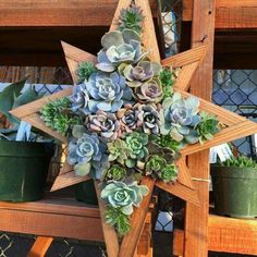 Star framebfilled with succulents Succulent Frame, Hanging Succulents, Succulent Wreath, Artificial Succulents, Succulent Arrangements, Succulents Garden, Planting Flowers, Succulent Landscaping, Outdoor Projects
