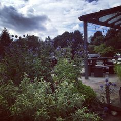 """8 Likes, 1 Comments - Amy Wilson (@thisstyle_rocks) on Instagram: """"The thistles are as tall as me this year- jungle-tastic #greatbritishweather #thistles #gardenstyle…"""""""