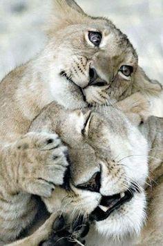 Animals Hugging