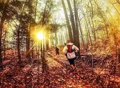 """No Limits - #Photo : @jti2p """"The woods are lovely dark and deep. But I have promises to keep and miles to go before I sleep."""" -- Robert Frost - Welcome to #RunnerLand  Lets follow us & tag #RunnerLand in your photos for featured  -"""