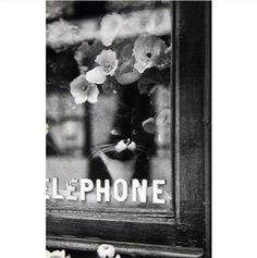 Le Chat du Fleuriste by Brassaï