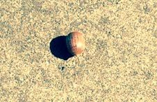 figure ground-the acorn blends in with the ground so weel its hard distinguishing between the two